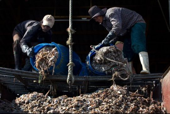 seafood-slavery-part-3-pic